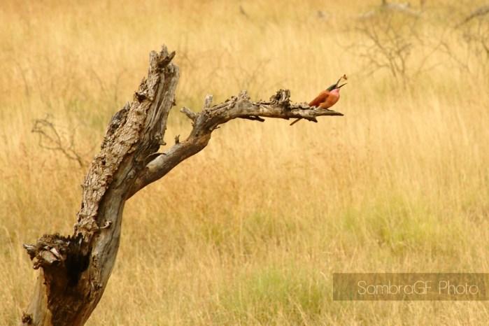 Bird in Kruger Park