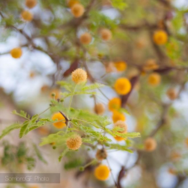 atenas detalle flores amarillo