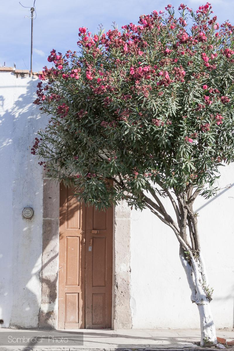{México} y mi obsesión con puertas y ventanas