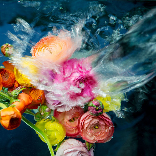 jessica kenyon flowers fine art