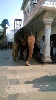 Real Elephant