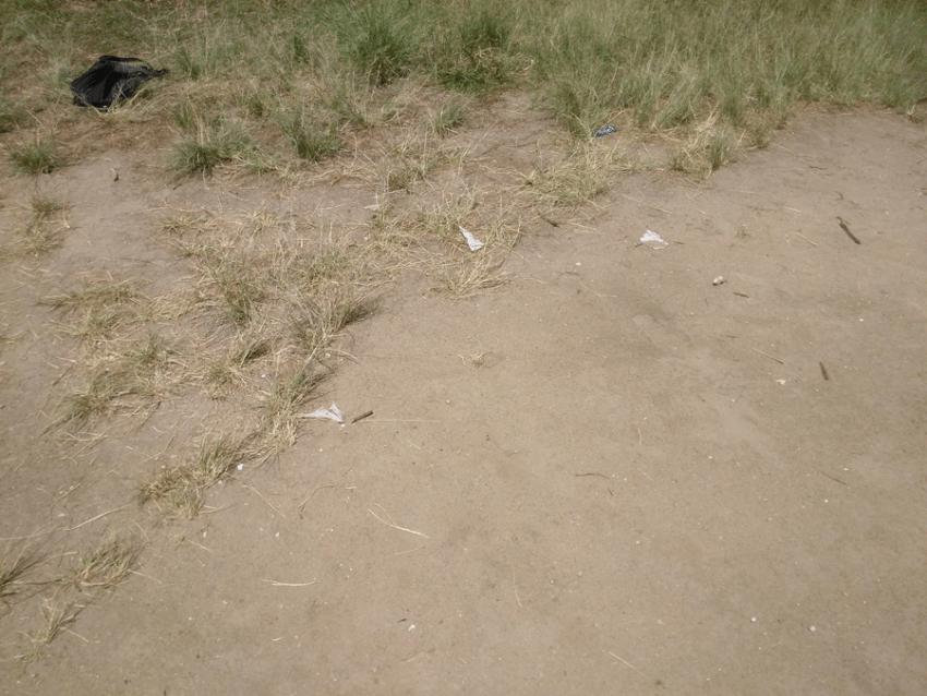 Desaparición del engramado del parque. Foto Carlos Crespo.