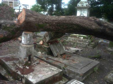 Destrucción de árboles y sepulcros. Fotos de Marinela Araque.
