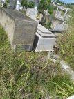 En el Cementerio Municipal de Tucacas la maleza arropa las tumbas. Foto ACN.