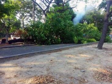 Árbol tumbado para usarlo como barricada, marzo 2014. Foto Walo83