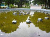 Fuente sin mantenimiento en el parque Los Mangos de la ciudad de Barinas. Patrimonio cultural del estado Barinas, Venezuela.