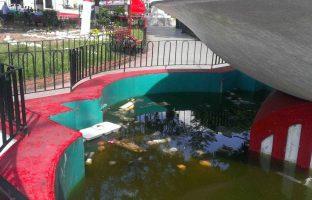 Agua de lluvia estancada en la fuente de la plaza Bolívar de Valera. Foto Ailyn Araujo, julio 2017.