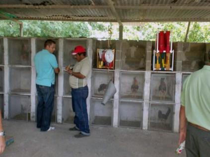 Apostadores de la gallera, en Santa Fe de Aguasay.Patrimonio cultural de Venezuela.