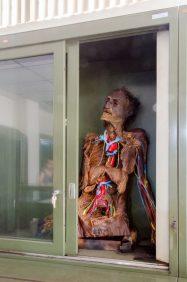 Preparación anatómica. Foto: Luis Chacín.