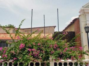 El desorbitado jardín del Panteón Regional del Zulia. Maracaibo. Foto Wilmer Villalobos, septiembre de 2018. Patrimonio de Venezuela en peligro.