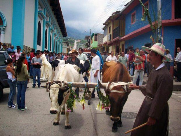 Bueyes en la procesión de San José de Bolívar, del Táchira. Foto en blog Riobobense, del historiador académico José Antonio Pulido, 2015.