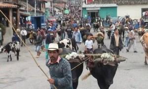 Fiesta de San Isidro en Timotes, Mérida. Foto diario El Impulso, 2015.