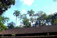 El techo de la antigua estación de ferrocarril es de tejas planas de cemento. Foto Liborio Car.