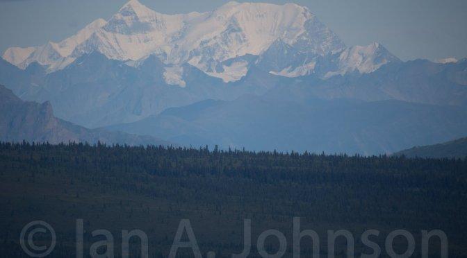 Some Natural History and Tips : Denali National Park