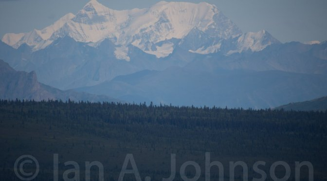Some Natural History and Tips : Denali National Park