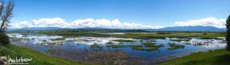 A panorama of the critical wetlands that Kootenai NWR preserves.