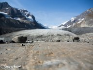 Marks of recession at the Athabascan Glacier, Canadian Rockies, Canada.