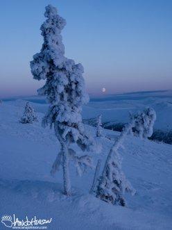 A beautiful moonrise through the hoar frost of Twelvemile Summit, Alaska.