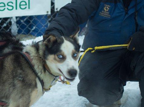 Look at those blue eyes!