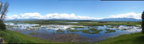A panorama from the auto-road at Kootenai NWR. Ponds, mountains, and ducks. A beautiful spot that is full of life!