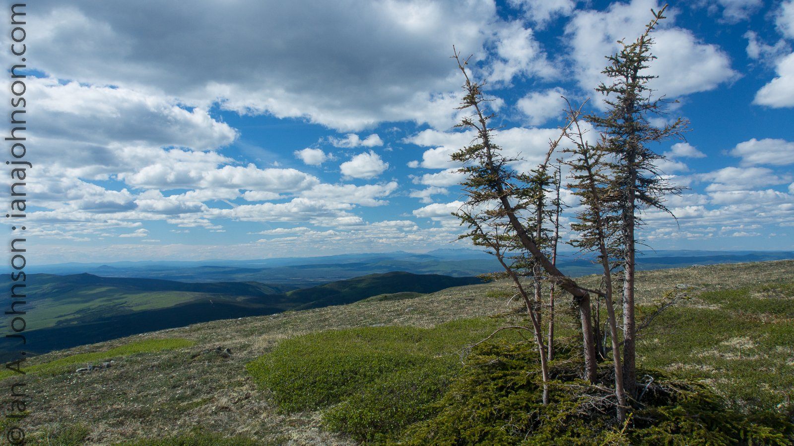 trees summer alaska - photo #23