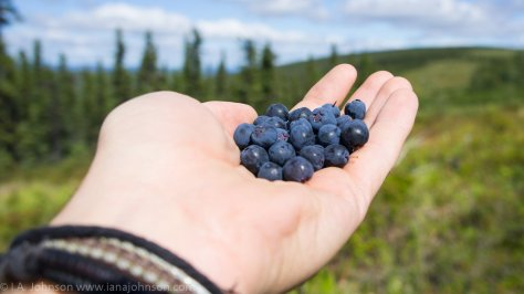 (4)... So that you can get a nice handful of berries like this one :)> !