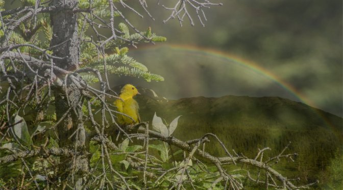 Birds and Rainbows on the Denali Highway