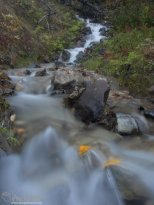 Fall colors in a stream in Denali National Park