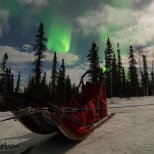 The aurora hangs over a staked sled at Black Spruce Dogsledding.