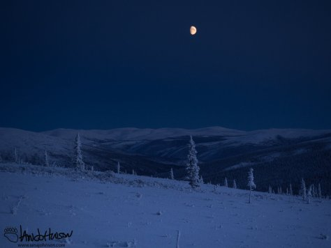 Up in the alpine tundra of the Pinnell Mountain trail, the moon sits high over all.