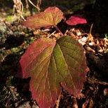 August 19th : crimson fall