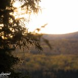 September 10th : Sunset through the spruces