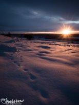 November 20th : A burst of sunrise illuminating old fox tracks