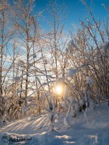December 1st : Sunburst through a winter wonderland