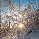 December 1st : Sunburst through a winter wonderland