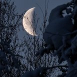 January 14th : The moon sets during the morning and is framed by snow-covered trees