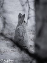March 31st : March Hare