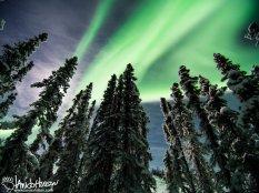 February 1st : Aurora borealis north of Fairbanks, Alaska