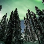 The full moon back-lights these black spruces in this aurora shot.