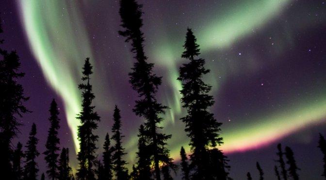 February 7th : Dog Day in Alaska/ Live Aurora Footage