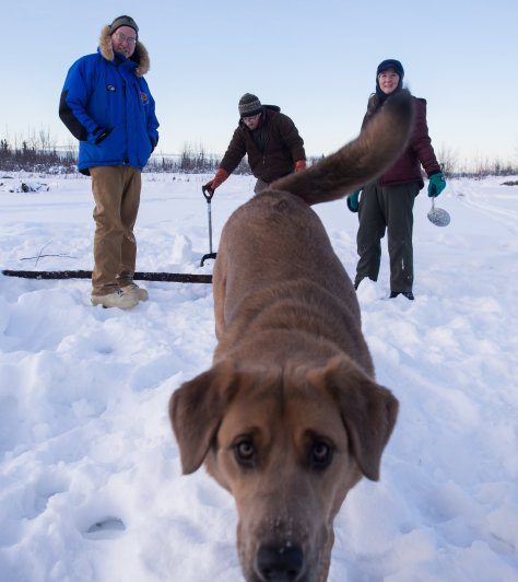 The crew looks on as Rue gets in closer for a look. It's a lot of fun having a young dog on the ice!