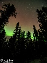 The big dipper hangs over a the trees and in the aurora