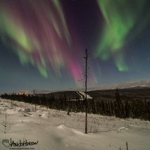 """""""Divide"""" - the aurora is seemingly split in half by the points of this spruce!"""