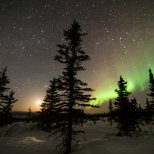 A black spruce divides the aurora and the moon