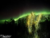 Autumn colors in the front of a striking green aurora
