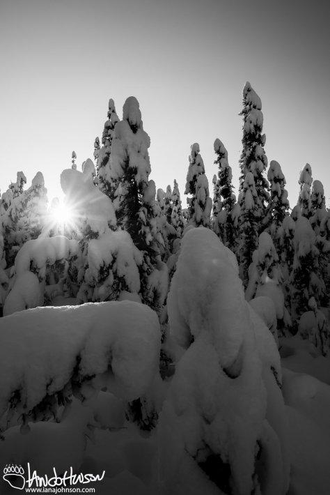Winter Sun Burst