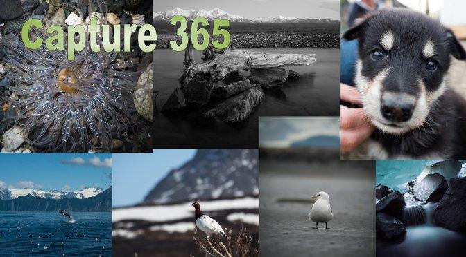 Creating an Image 365
