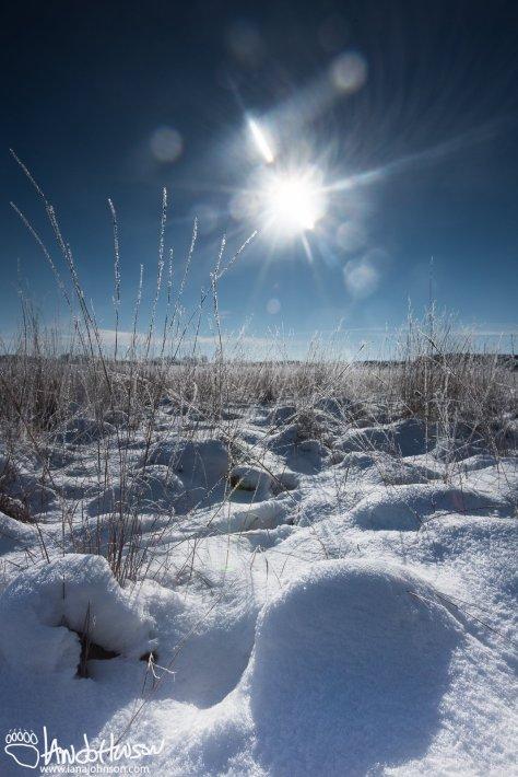 Prairie Hoar Frost