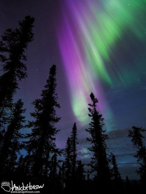 Sun-kissed Aurora, Fairbanks, Alaska