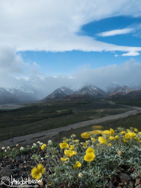 Windy day and a half moon at Polychrome Pass, Denali National Park, Alaska